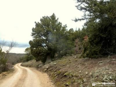 Acebos y Enebral de Prádena; senderismo para mayores de 60calas en peñiscola viajes en autocar cir